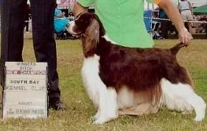 Keeli New AKC Champion!